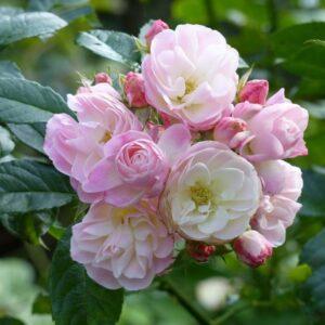 Bouquet_Parfait